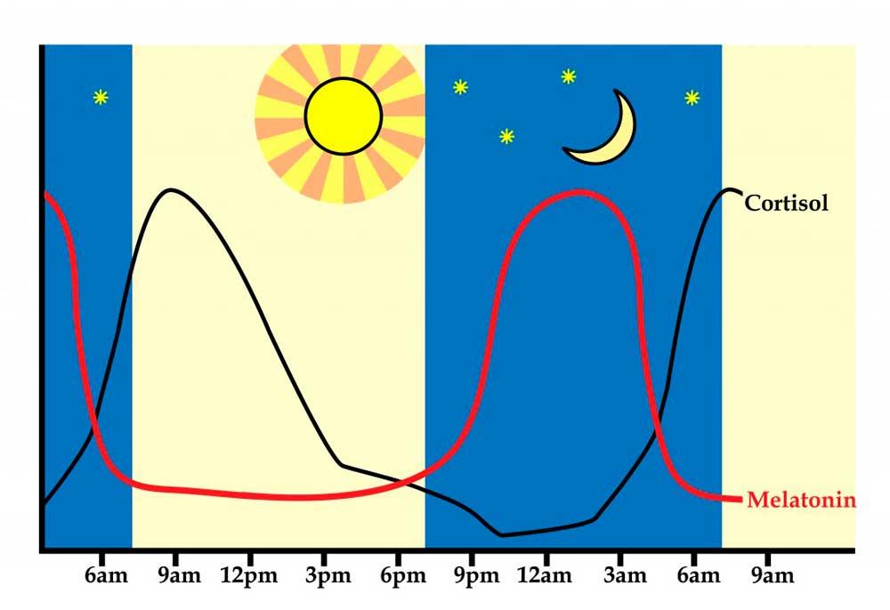 В какие часы вырабатывается мелатонин